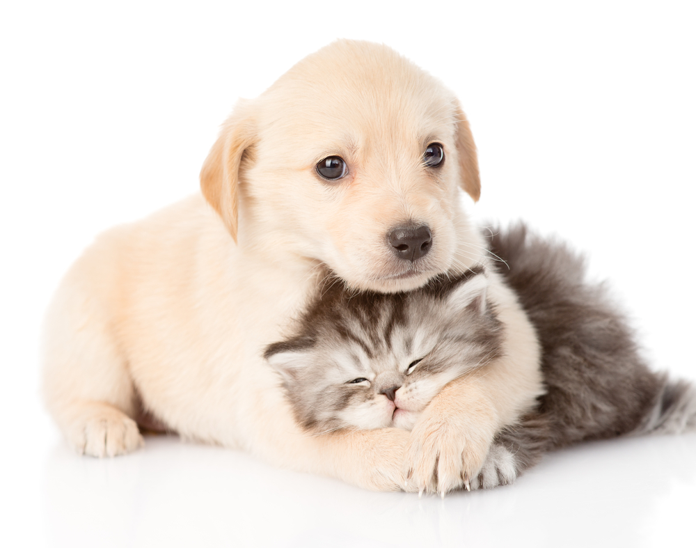 When Should Puppies and Kittens Visit the Vet?